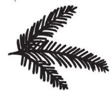 Pine Branch (1386f)