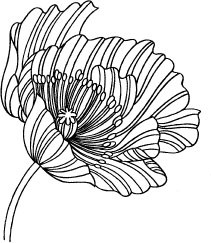 5167F - striped outline poppy