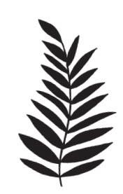 Palm Branch (1535f)