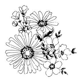 5511i - sketched blooms