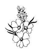 5518d - blossoms