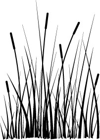 Large Cattails (mbg2020)