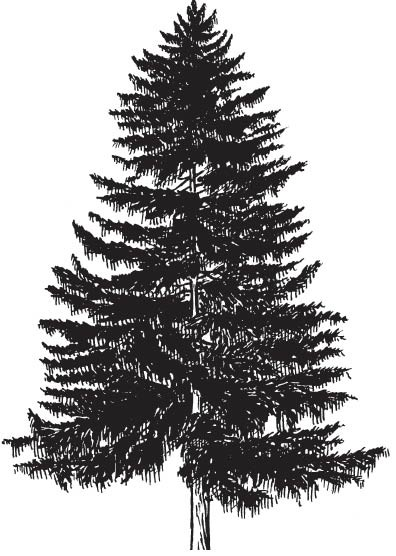 5664h - Pine Tree Rubber Stamp
