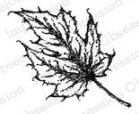 Leaf 2 ioC14238