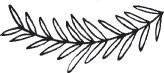 outline branch (1517e)