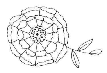 Delicate Flower Bloom (1537h)