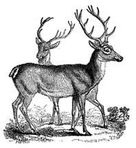 5402E - vintage deer