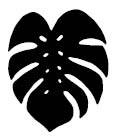 5693c - monstera solid leaf
