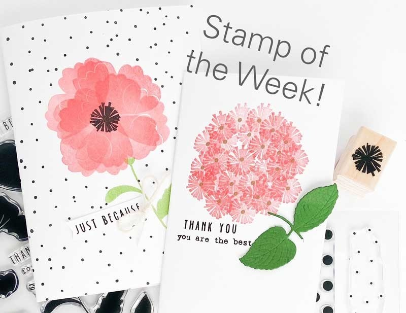 Stamp of the week - star flower
