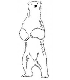 5596e - polar bear sketch
