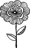 Striped Daisy (1209e)
