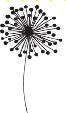 Flower Bloom (1369h)