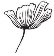 Tulip (1375g)