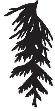 Woodland Branch (1385h)