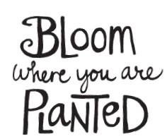 Bloom (1422e)