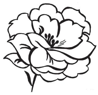 Blooming Peony (1534i)