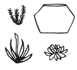 Succulent Cube (1548i)