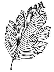 5425D - hand drawn leaf