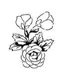 5514c - sweet rose corsage
