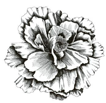 5579k - pen and ink peony rubber stamp
