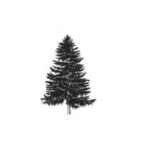 5760d - small fir tree