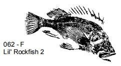 Fred B Mullett Lil' Rockfish 062