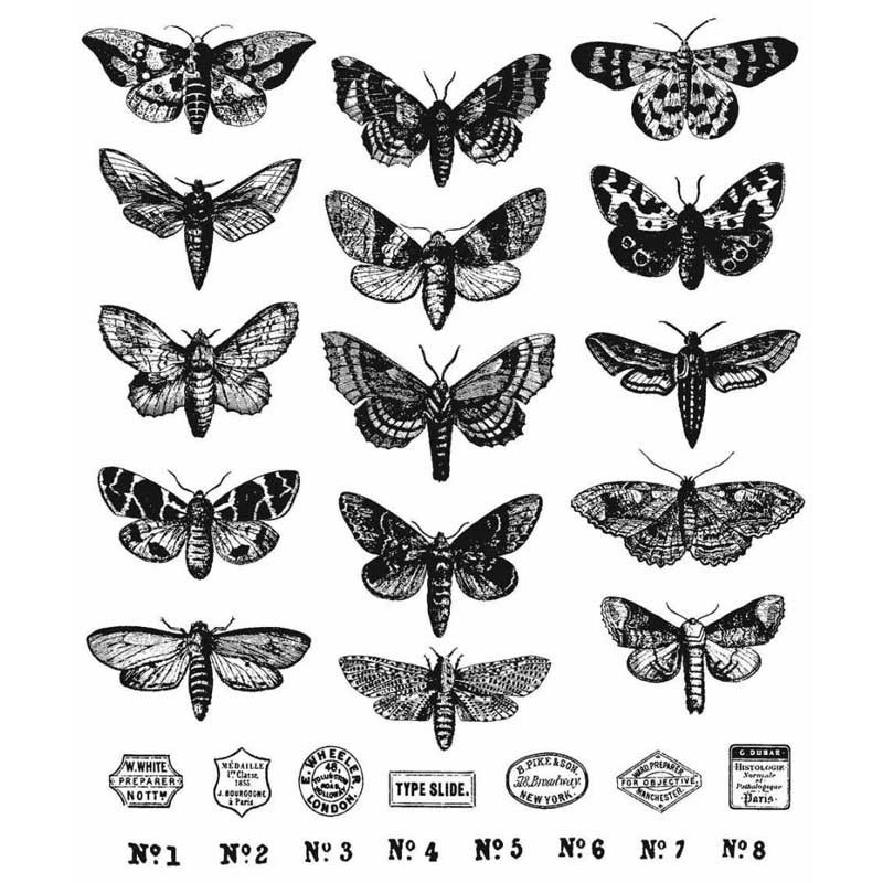 "Tim Holtz Moth Study Stamp Set 7""X8.5"""