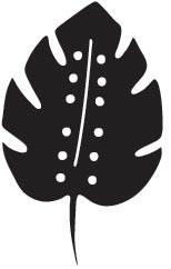 Leaf (10224)