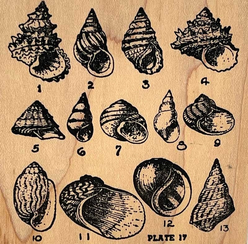 Shell Plate Rubber Stamp